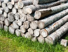 Pile of stacked cut logs on grass - stock photo