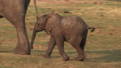 Elephant mother and baby walking away from camera Stock Footage