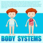 Body systems of boy - stock illustration