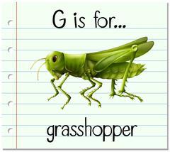 Flashcard letter G is for grasshopper - stock illustration