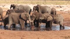 Herd of elephants drinking at artificial waterhole Stock Footage