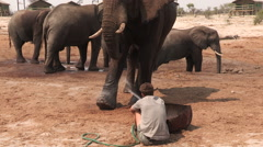 Man forms unusual bond with injured wild elephant and sprays water on sore leg - stock footage