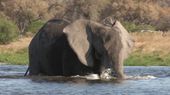 An elephant bull swimming and playing in the water of a river in the Okavango Stock Footage