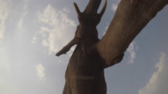 Spectacular footage of elephants walking directly over camera Stock Footage