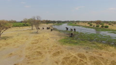 Aerial shot of elephants drinking at a river in the Okavango Delta Stock Footage