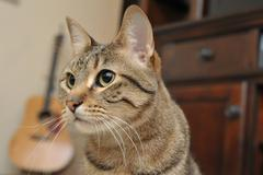 Cat and Guitar Horizontal - stock photo