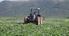 Tractor spraying vegetables with insecticide Stock Footage