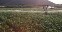 Panoramic shot of irrigated cornfield Stock Footage