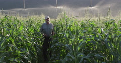 Farmer inspecting irrigated cornfield Stock Footage