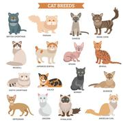 Cat breed set - stock illustration