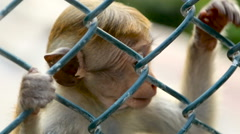 Monkey in a Cage in SriLanka Stock Footage
