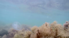 Underwater life in the shallow waters of Black sea camouflaged Goby fish Stock Footage