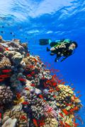 Scuba diver explore a coral reef showing ok sign - stock photo