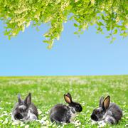 Three Rabbits. Cute Little Easter Bunny in the Spring Meadow. Stock Photos