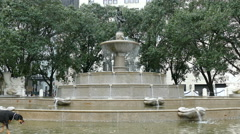 Man walking a dog, water fountain at Plaza Hotel, Fifth Avenue, Manhattan, NY Stock Footage