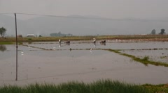 Ploughmen work time lapse on the field of rural Myanmar  Stock Footage