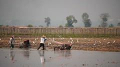 Ploughmen work  on the field of rural Myanmar  Stock Footage