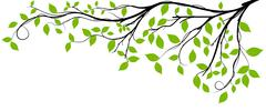 Tree Branch Silhouette. Vector Graphics - stock illustration