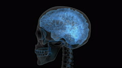 X-ray of a human skull with electrons moving around the brain. - stock footage