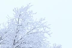 Snow-covered branches pattern on a white background Stock Photos