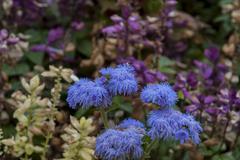 Background of flowers various in garden of  Montana Stock Photos