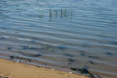 Authentic shore at Rabisha  lake near by Magura cave - stock photo