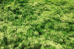 Abstract blurred green natural leaf background - stock photo
