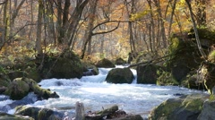 The Mysterious Oirase Stream flowing through the autumn forest in Towada Hach Stock Footage