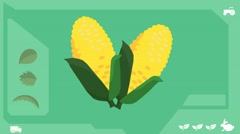 Maize - Vector Graphics - Food Animation - Health - stock footage