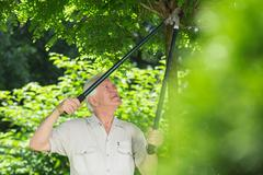 Trimming trees in garden - stock photo