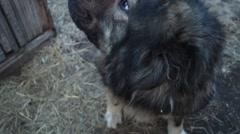 Dog large close-up Stock Footage