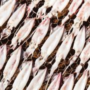 Drying squid on net - stock photo