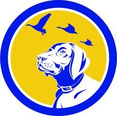 Stock Illustration of English Pointer Dog Head Looking Up Circle Retro