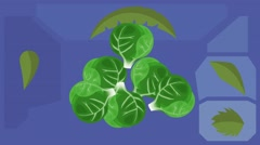 Brussels Sprouts  - Vector Graphics - Food Animation - hard purple Stock Footage