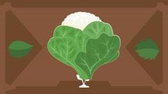 Cauliflower  - Vector Graphics - Food Animation - brown Stock Footage