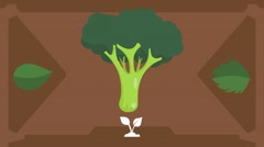 Broccoli  - Vector Graphics - Food Animation - brown Stock Footage