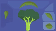 Broccoli  - Vector Graphics - Food Animation - leaves 02 Stock Footage