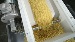 Macaroni dropping from a machinery to prepare pasta - stock footage