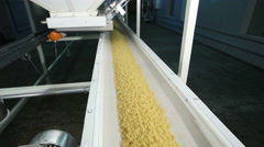Macaroni rolling on a conveyor belt in a pasta factory Stock Footage