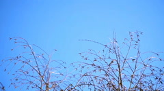 Tree sways the wind against the blue sky Stock Footage