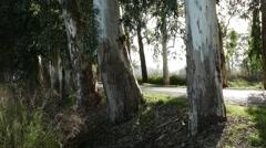 Flare of Sunbeams Over Tree Trunks. 4k Stock Footage