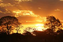 Sunset in the Pantanal Mato Grosso do Sul Brazil South America - stock photo