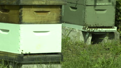 Bee Hives on Urban Farm Stock Footage