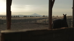 Horse in dark stable with Oregon mountain sunset, wide shot Stock Footage