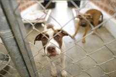 dog in an animal shelter looking through the fence  - stock photo