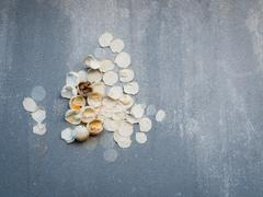 A new life is born, eggshell of unidentified animal on the concrete wall - stock photo