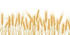 Ears of wheat horizontal border seamless pattern - stock illustration