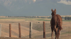 Young horse gazes toward mountains Stock Footage