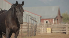 Horse with barn on Montana ranch - stock footage