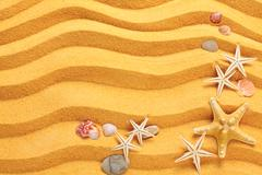 Yellow sand and seashells background. Stock Photos
